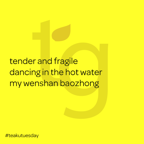 tender and fragile / dancing in the hot water / my wanton baozhong